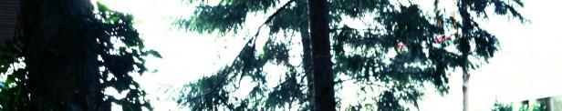 cropped-casa-jardc3adn-002.jpg